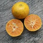 ส้มสรรพคุณและประโยชน์ของส้ม